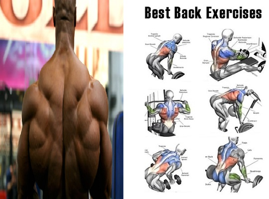 Best Some Effective Back Exercises For Your Back