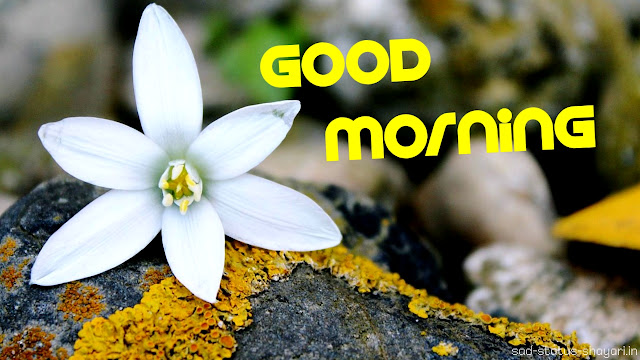 good morning hd images flower