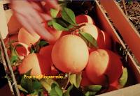 Come vincere gratis 20 kg. di arance bio dalla Sicilia