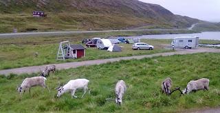 Rener går gennem campingpladsen