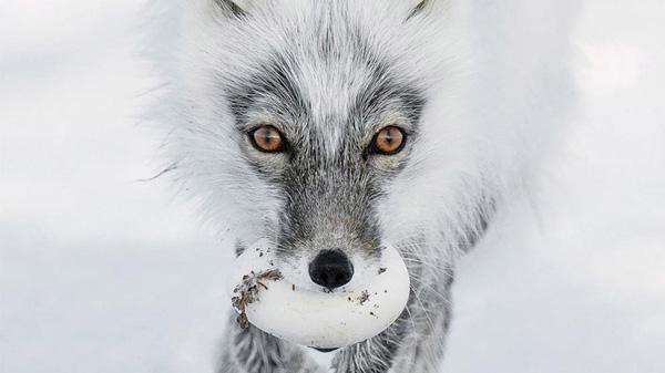 Vahşi Yaşam Fotoğrafları - 1