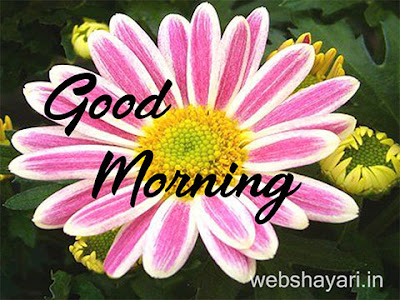 cute flower good morning images