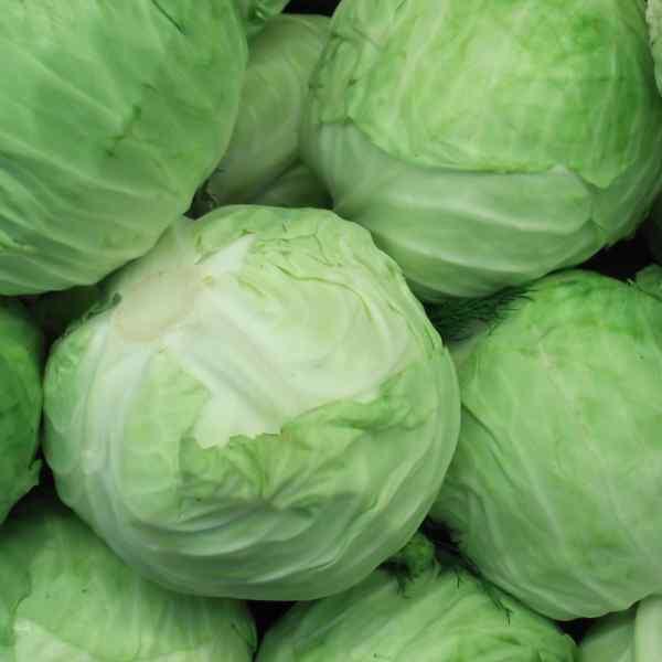 Cabbage in marathi