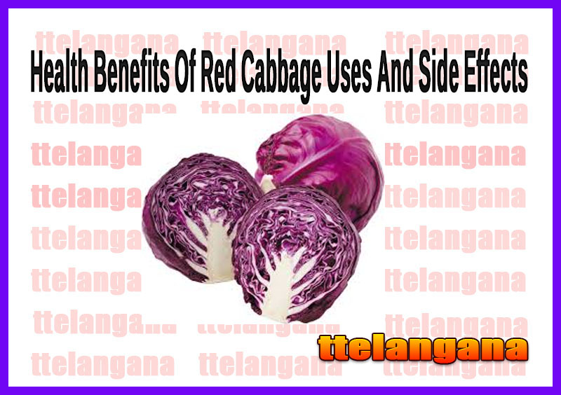 Health Benefits Of Red Cabbage Uses And Side Effects