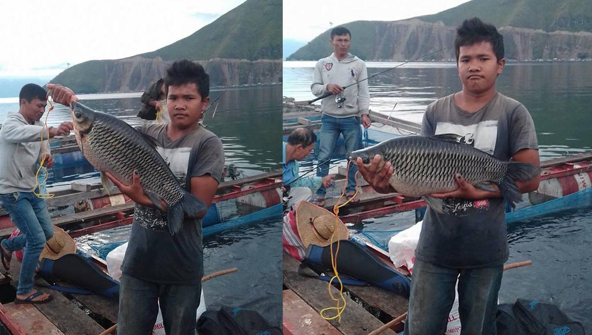 Download 46 Koleksi Gambar Ikan Ihan Batak HD Terpopuler