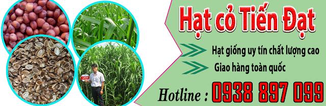 Địa chỉ bán hạt giống cỏ chăn nuôi uy tín chất lượng