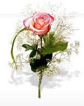 Tự tình Valentine- hoa hồng ngày Valentine