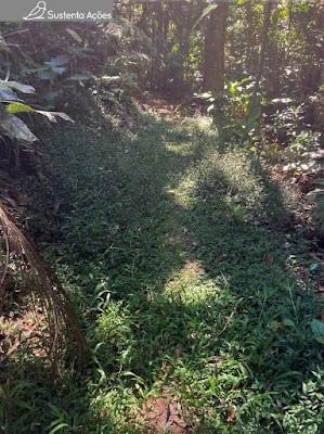 Uma parte da trilha coberta por plantas