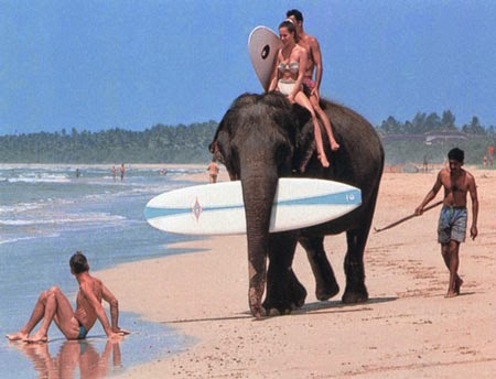 10 Best Adventure Holiday Destinations | Surf in Sri Lanka and you can get an elephant to carry your surf board