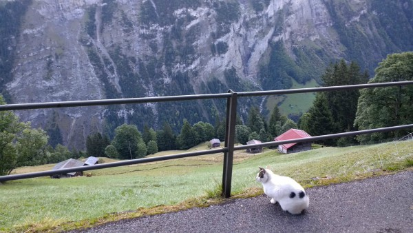 switzerland animals