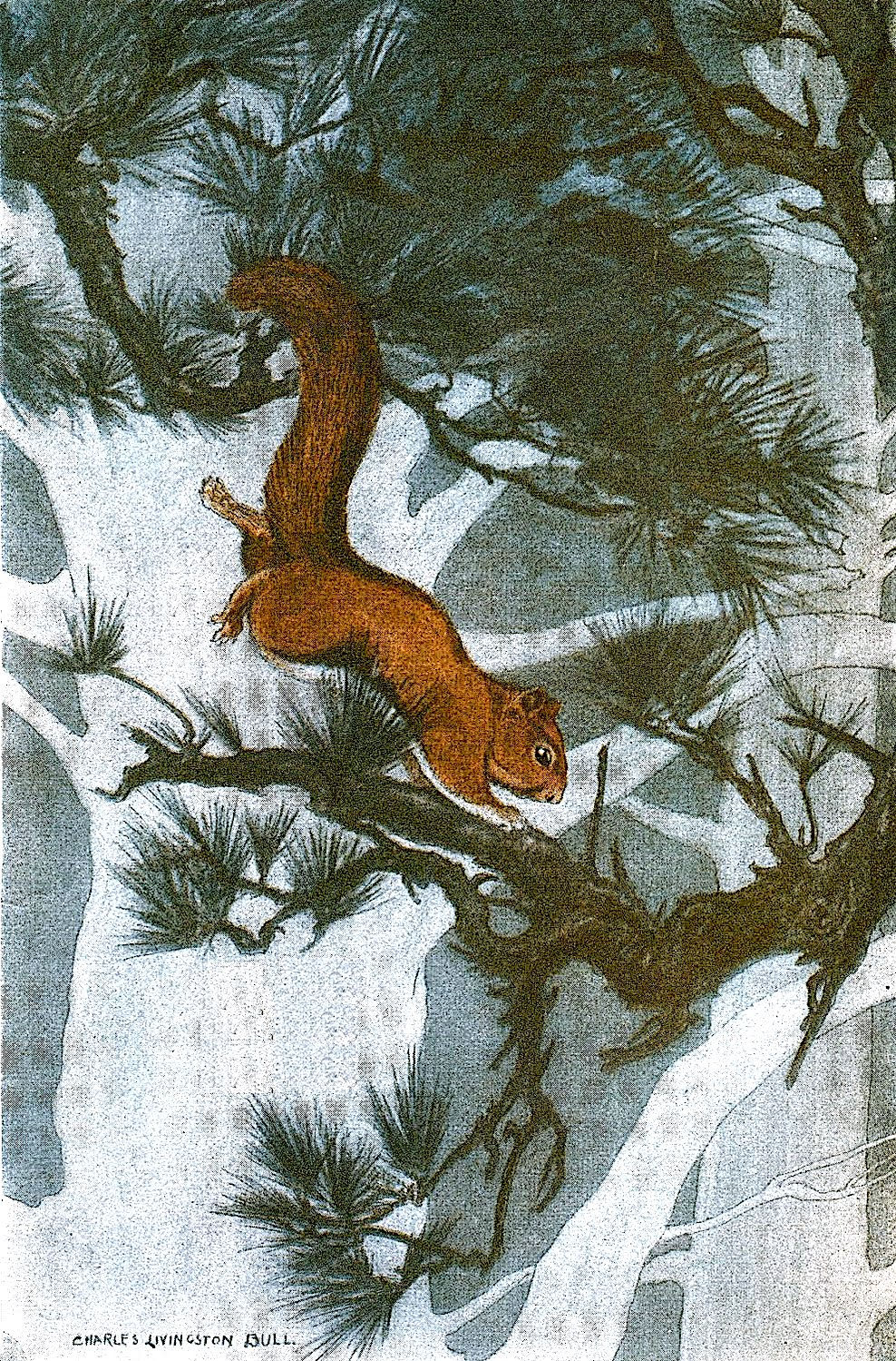a Charles Livingston Bull illustration of a leaping squirrel in winter trees