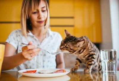اكل للقطط من المنزل