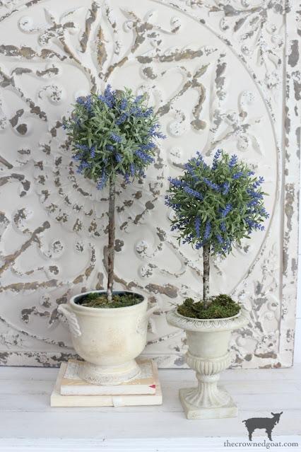 Pretty indoor topiary plants