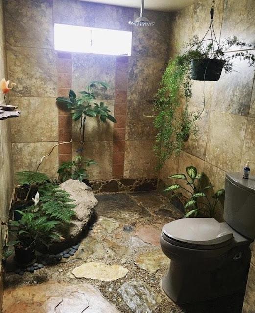 ต้นไม้ปลูกในห้องน้ำ