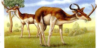 Il Sintetocerato, strani animali del passato
