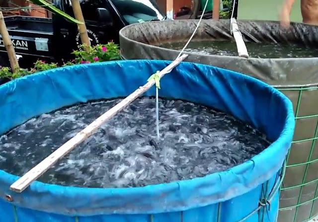 kolam ikan terpal