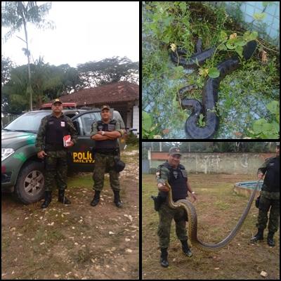 ANANINDEUA: POLICIAIS DO BATALHÃO AMBIENTAL RESGATAM SUCURI