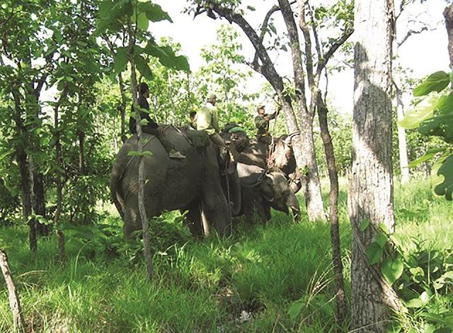Đừng để voi Tây Nguyên thành ký úc do rừng ở đây bị thu hẹp!