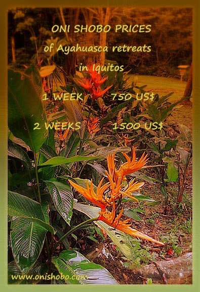 AMAZON GREEN ECOLODGE: New prices of Ayahuasca retreats in Peru