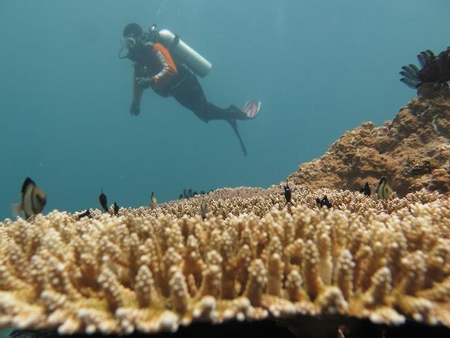 5 Diving Spot Recommended di Kepulauan Padaido