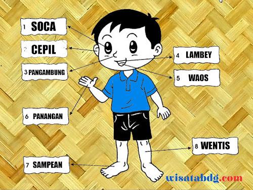 anggota badan dalam bahasa sunda