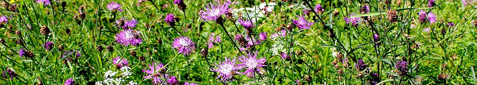 Цветы для святителя Магнериха Трирского.