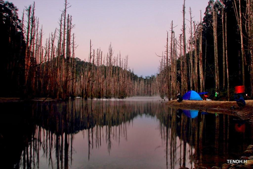 飛: 水漾森林探幽