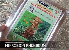 MIKRObion RHIZOBIUM Pupuk Hayati