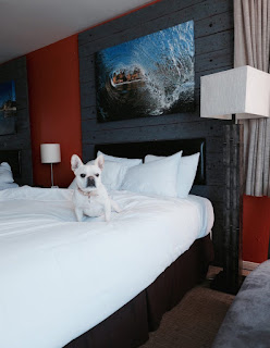 cama alta para cães