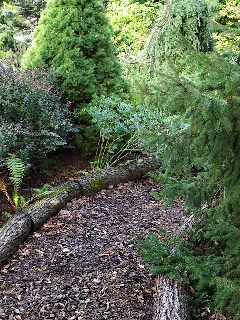 ścieżka ogrodowa z kory, drewniane obrzeża, ogród leśny
