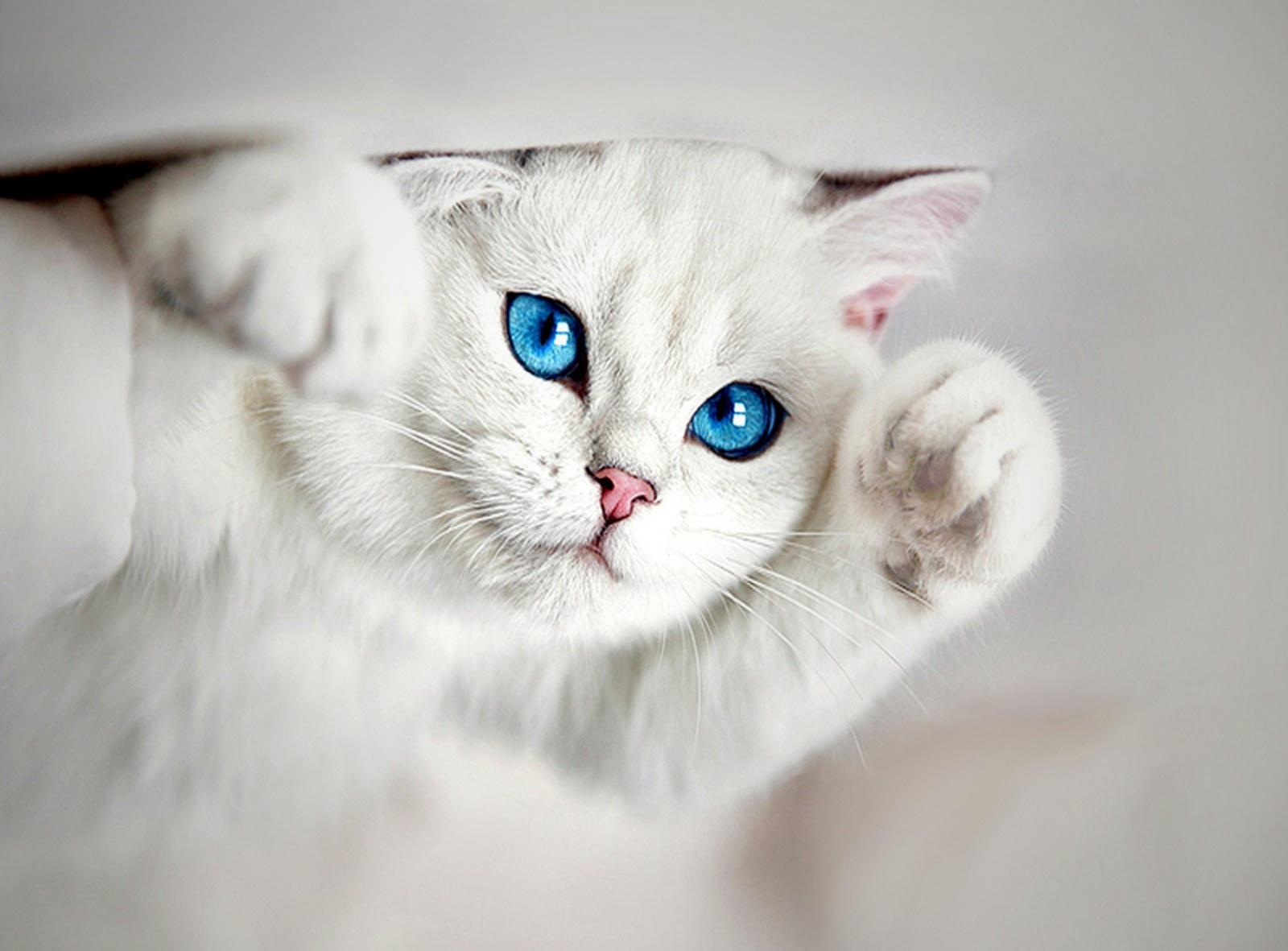 Gambar Kucing Frustasi godean.web.id