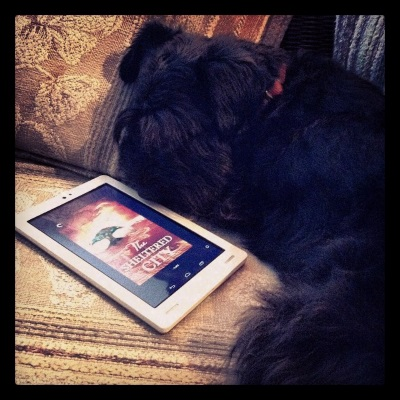 Duffy lays curled around a white Kobo with The Sheltered City's red-toed cover on its screen.