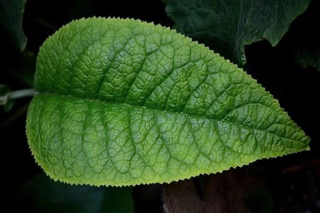 पत्तियों का रंग हरा क्यों होता है?/Patiyo ka rang hara kyu hota/