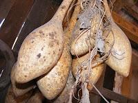Dry bottle gourd