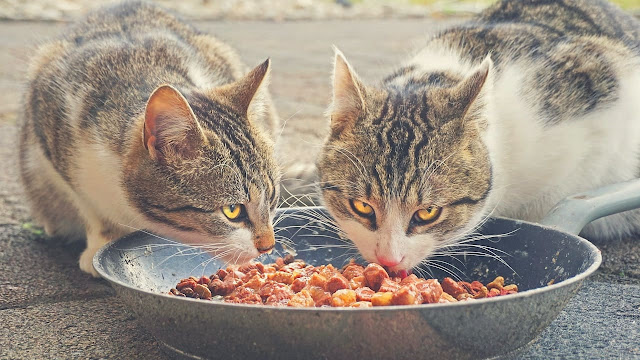 Do Cats Need High-Protein Cat Food?