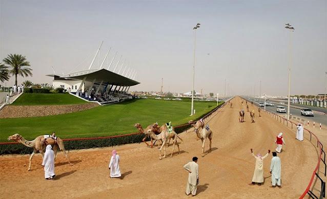 Al Marmoom Camel Track