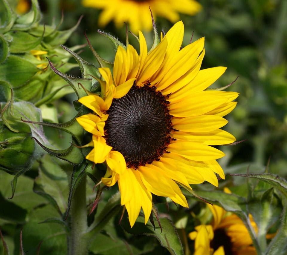 Beautiful Flower For Wallpaper: Flowers For Flower Lovers.: Beautiful Flowers Desktop