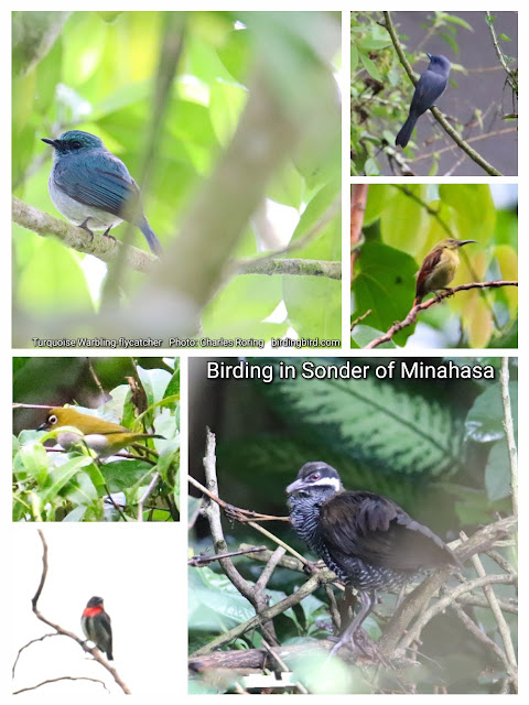 Birdwatching, sightseeing, cultural tour in Minahasa regency of North Sulawesi