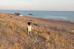 Lonely Stray Dog With 'Proud Soul' Walks Up To A Stranger On Beach And Right Into Her Heart