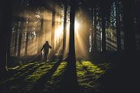 Forest Shadows by Kiwihug on Unsplash