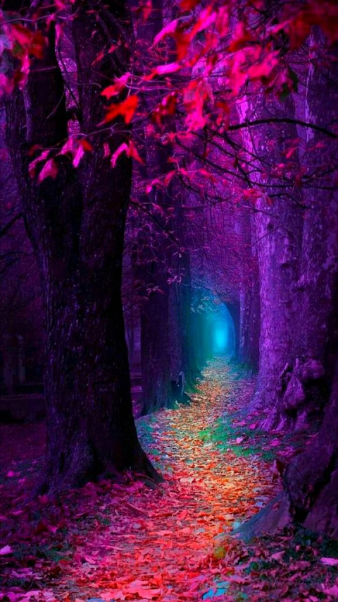 Lối mòn trong rừng