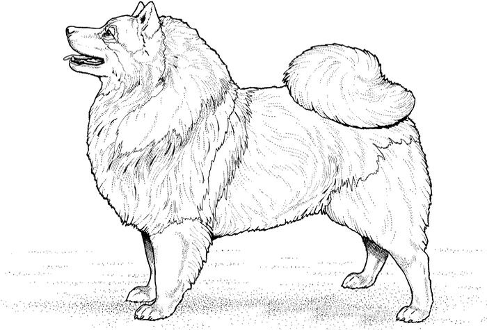 dog coloring pages realistic running - photo#50