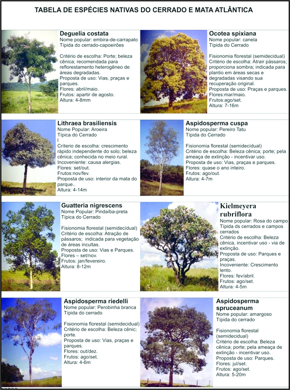 Espécieis nativas do Cerrado e Mata Atlântica