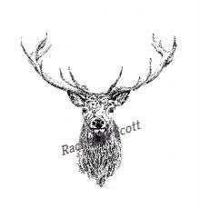 Red Deer Stag stipple illustration by Rachel M Scott
