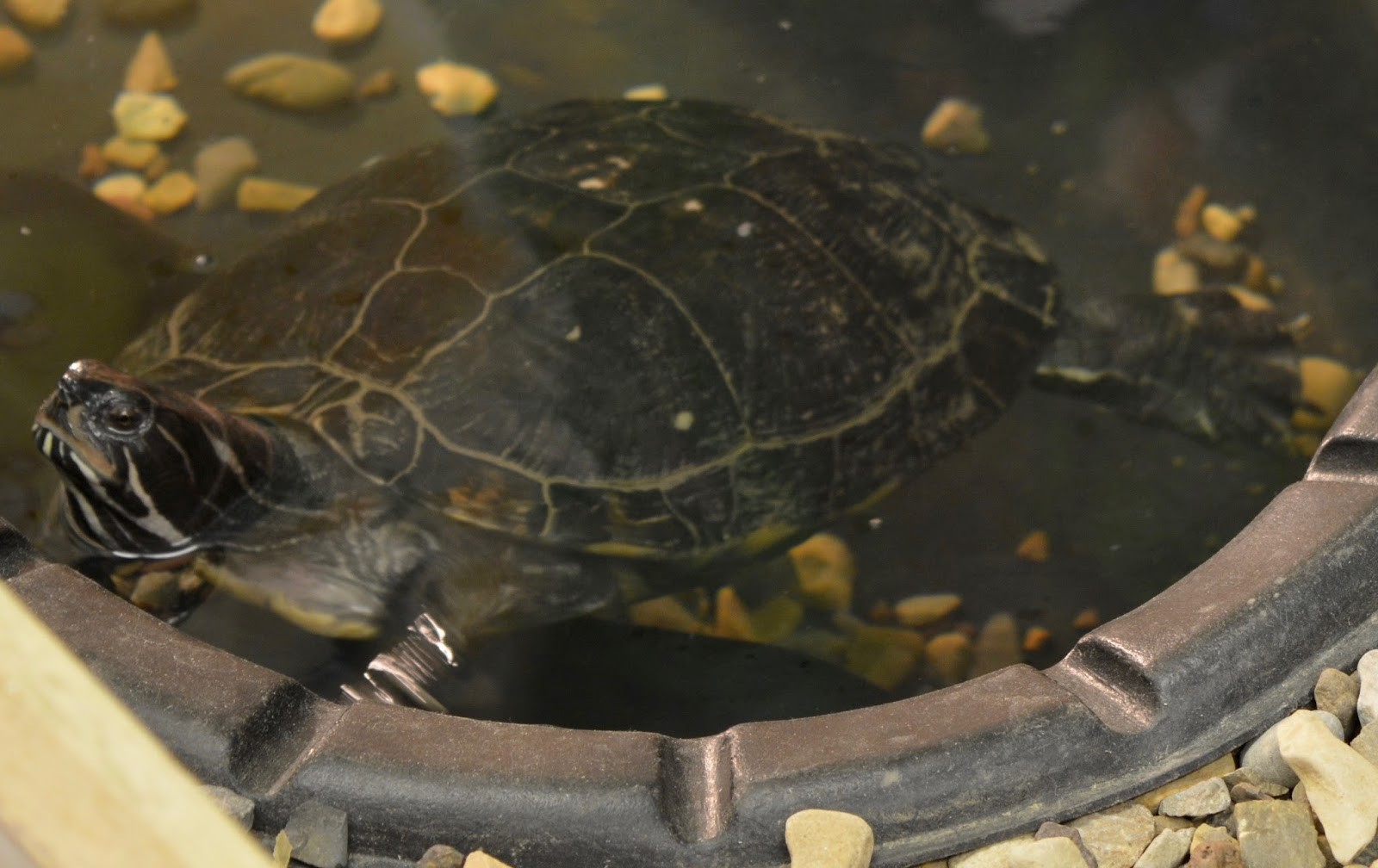 Ouseburn Farm Newcastle | A FREE Place to Take the Kids - turtle