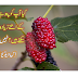 mulberry amazing health benefits of men and women