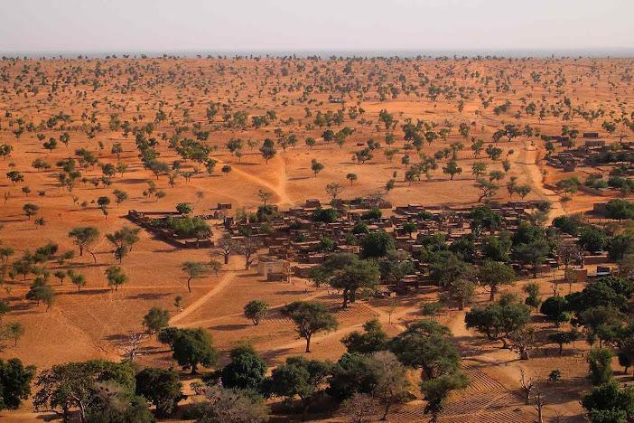 Descoberta de 1,8 bilhão de árvores no deserto do Saara espanta alarmistas