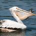 Adaptasi Hewan Jenis Burung dan Tujuannya