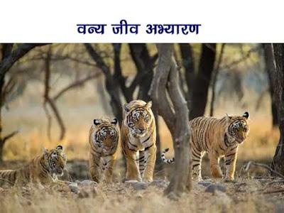 वन्य जीव अभ्यारण