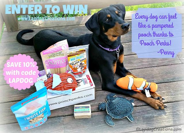 Every dog can feel like a pampered pooch thanks to #PoochPerks just ask Penny! YOU can enter to win a box for your dog or SAVE 10% when you subscribe with our coupon LAPDOG #LapdogCreations #DobermanPuppy #AdoptDontShop ©LapdogCreations